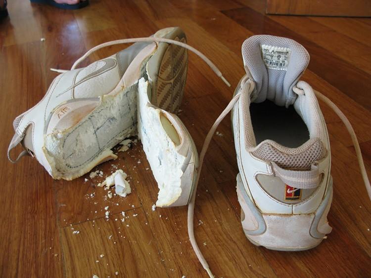 Основной риск стирки этой обуви в том, что при размокании клей может раствориться, а некоторые материалы верха – деформироваться