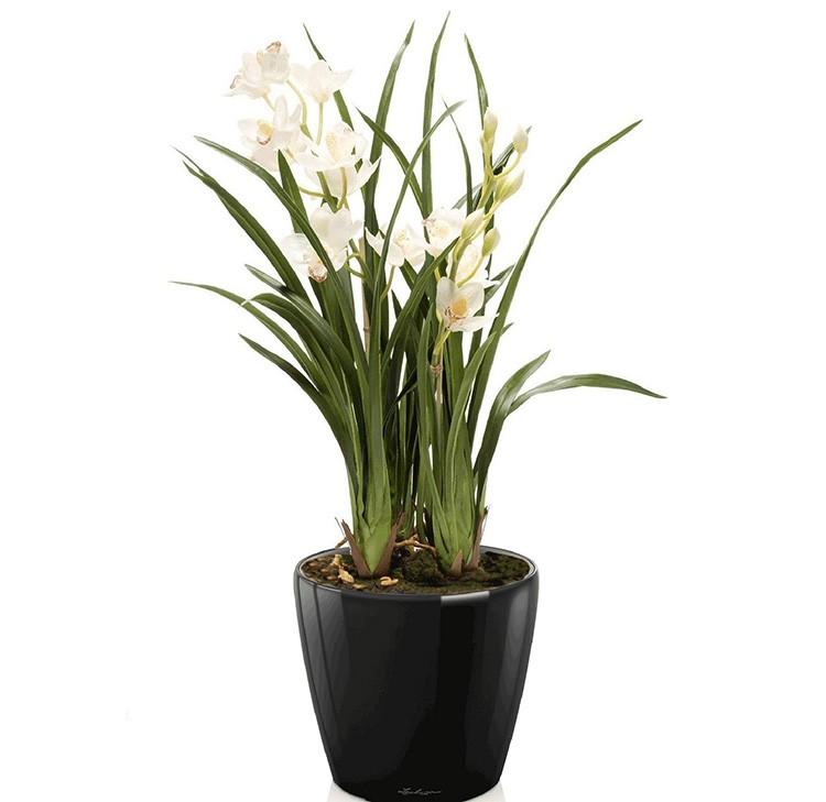 Тоже крупномерные орхидеи под названием цимбидиумы, имеют миниатюрные разновидности и обширную цветовую гамму. Это самый лучший тип орхидей для новичков. Цветёт красота в холодное время года.