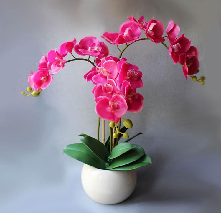 Фаленопсис есть повсюду, где продают орхидеи. Те, кто соблюдают все правила ухода, любуются довольно длительным цветением. Это один из самых легковыращиваемых типов цветка.