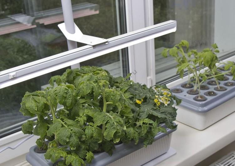 Поскольку термоплёнка задерживает УФ лучи, то декоративным растениям на окнах нужно обеспечить дополнительную подсветку