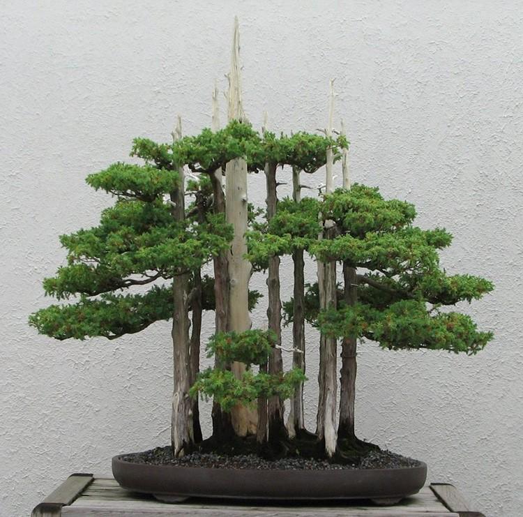 В стиле бонсай формируют деревца, которые не отличить от взрослых собратьев.