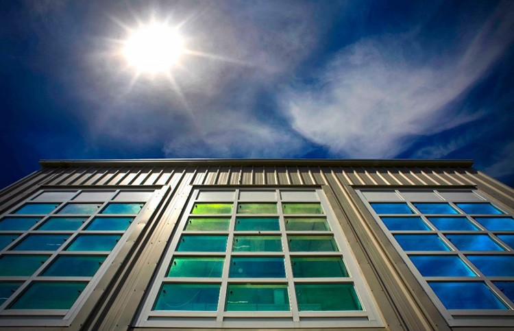 Здесь стёкла меняют цвет в зависимости от угла падения солнечных лучей
