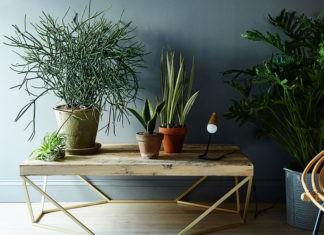 Подбираем самые лучшие комнатные домашние растения и цветы по фото и названию