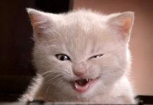 Проделки любимого котика: как избавиться от резкого запаха кошачьей мочи