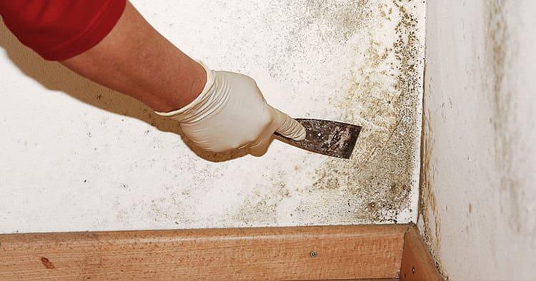 Зачистка бетона от грибка