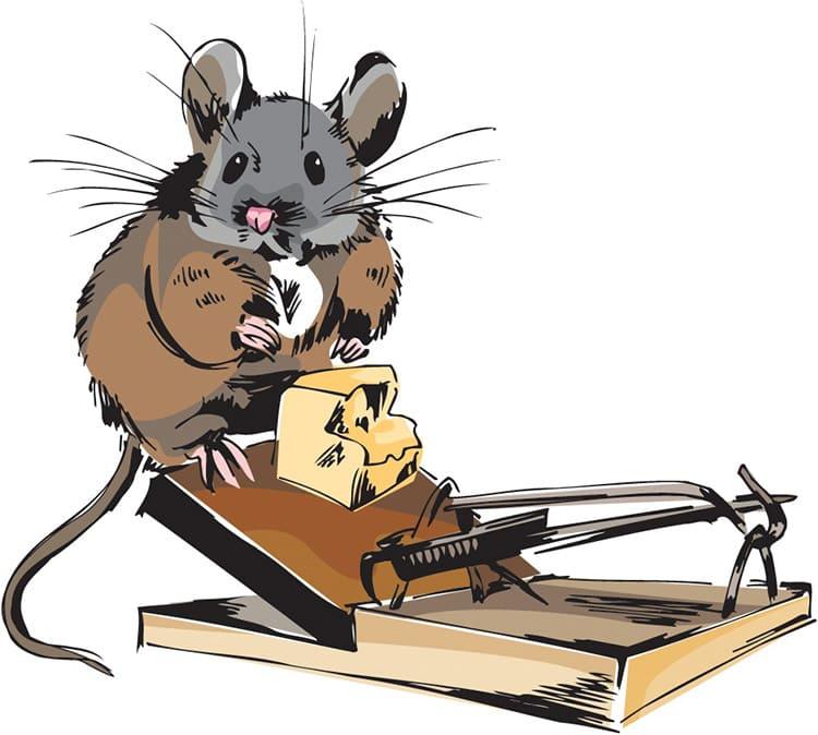 Приманка зазывает мышку ближе, особенно падки эти создания на орешки, хлеб, мясо и семечки.