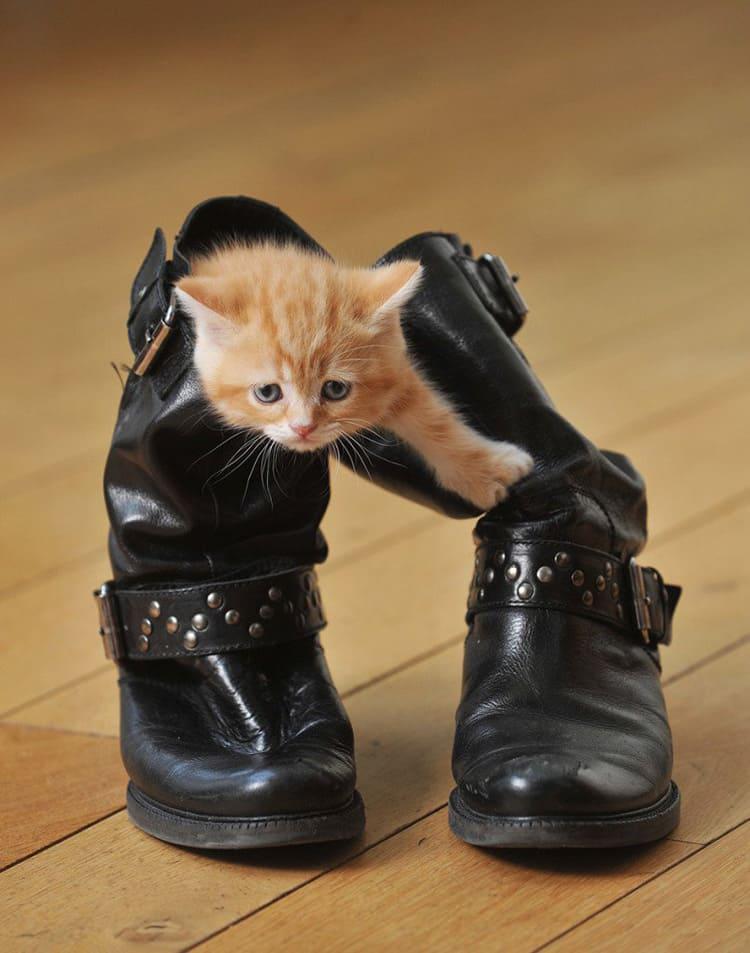 Старая метка опаснее своим стремлением остаться на обуви на веки вечные, и тем самым приглашая котика повторить процедуру.