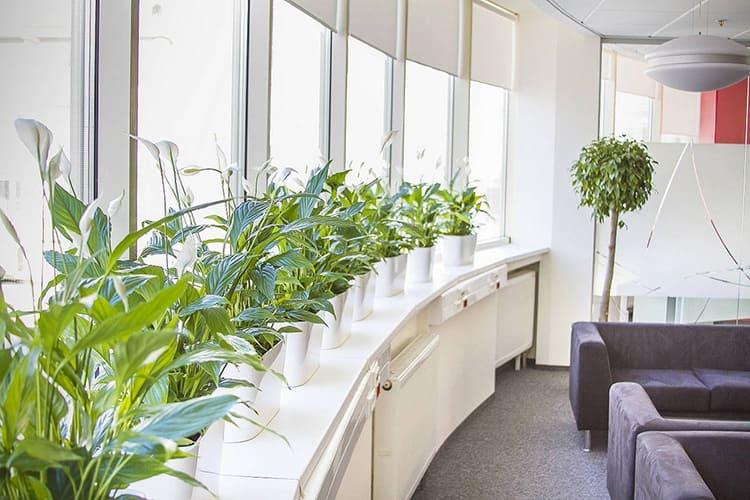 Хорошо смотрятся растения в ряд в одинаковых горшках на подоконнике