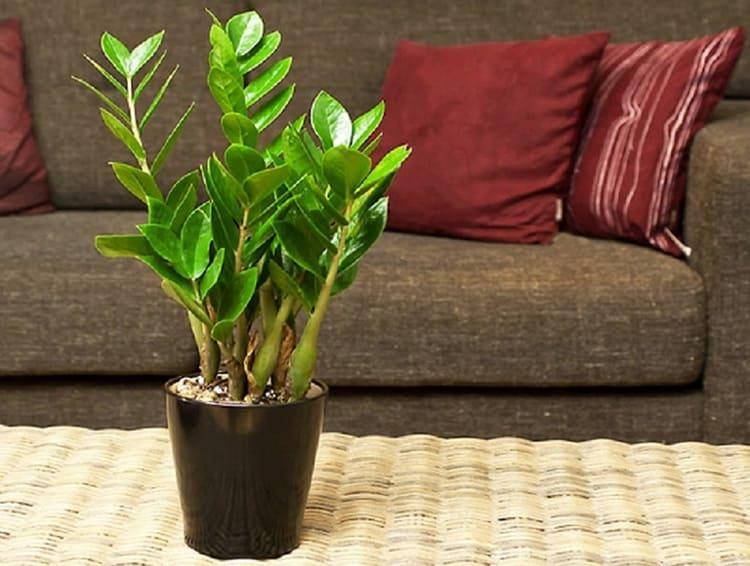 Нескучный домашний сад: комнатные растения в интерьере жилого дома