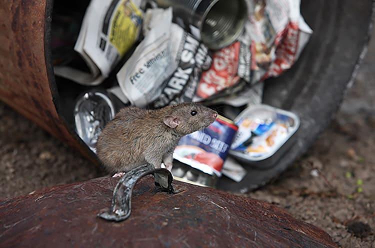 Любой забытый в доме уголок — потенциальное место жительства маленьких мышек.