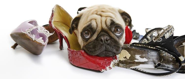 Если у вас дома появился щенок или котёнок, прячьте обувь в недоступном для них месте, иначе она может быть безнадёжно испорчена.