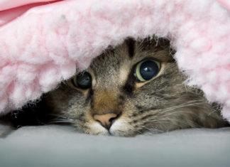 Эффективные способы согреться, если в квартире холодно, а отопление ещё не включили