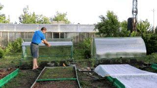 Помощник садовода: парник «Хлебница» и его особенности