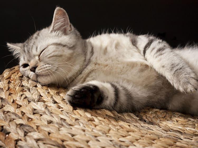 И наконец, коврики-циновки очень любят домашние животные. Изделия хорошо проветриваются, и лежать на них одно удовольствие