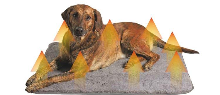 Тёплый коврик станет любимым местом кота или собаки