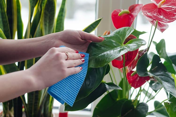 Пластиковые, фарфоровые и цветы из полимерной глины можно протирать влажной тряпкой