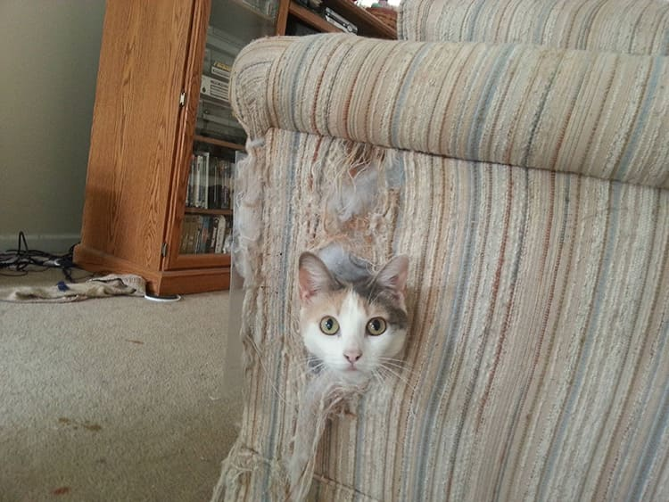 Пятна вокруг выключателей, выгоревшие шторы или подранная любимым котом спинка кресла – всё это выдаёт вашу стеснённость в средствах