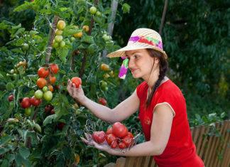Тест: насколько вы крутой садовод: тест для избранных