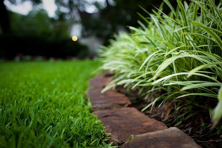 Красивый газон – мечта достижимая