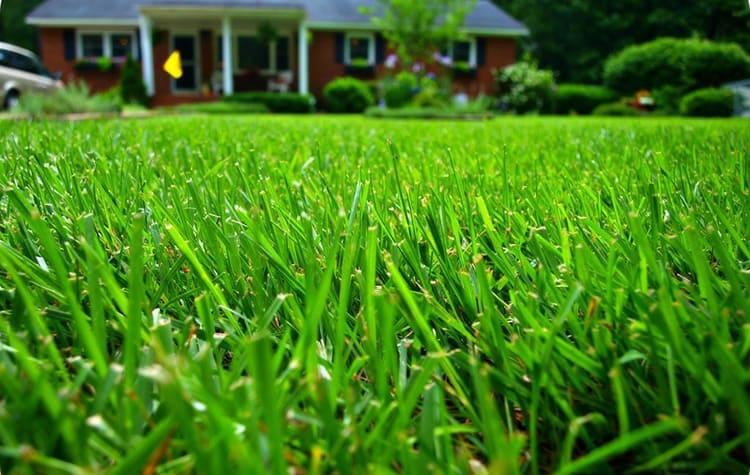 Никогда не срезайте за раз весь пласт травы. Если трава высокая – сначала срежьте верхушку, а уже потом добейтесь нужной длины..