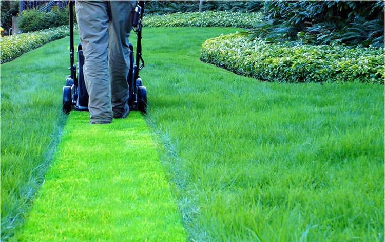Аккуратно выбирайте время для кошения травы