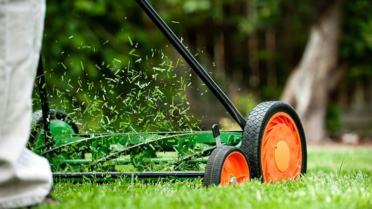 Не пренебрегайте полезной функцией мульчирования – многие газонокосилки позволяют дополнительно измельчить скошенную траву