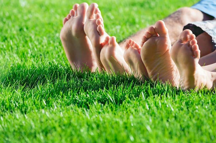 Один из народных способов определения нужна ли газону вода, последить, если после хождения по ней, трава не поднялась, значит необходимо поливать
