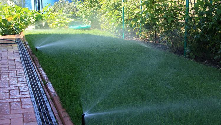 Таким образом, если же вы польёте газон в полдень, вода просто испарится и не дойдёт до корней