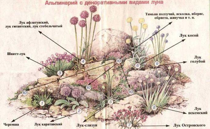 Альпийская горка своими руками: как легко и бюджетно украсить свой сад
