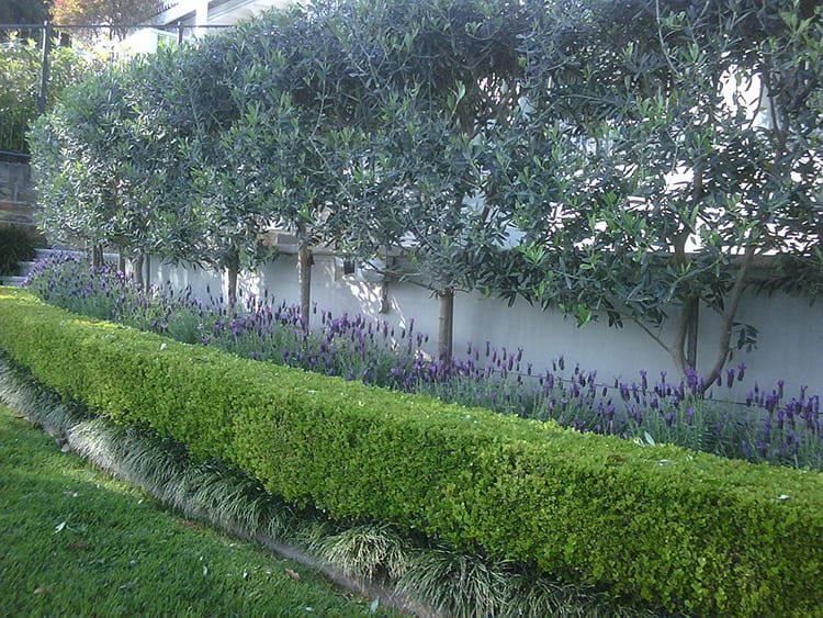 А здесь и вовсе деревья растут вдоль ограждения. Их следует пересадить, отодвинув на 3 метра