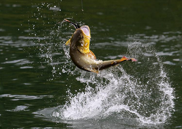 Без рыбы не возвращайся! Несколько хитрых приспособлений для рыбалки от читательницы HouseChief