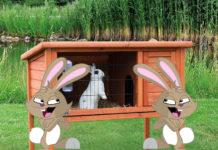 Удобная клетка для кроликов: делаем своими руками