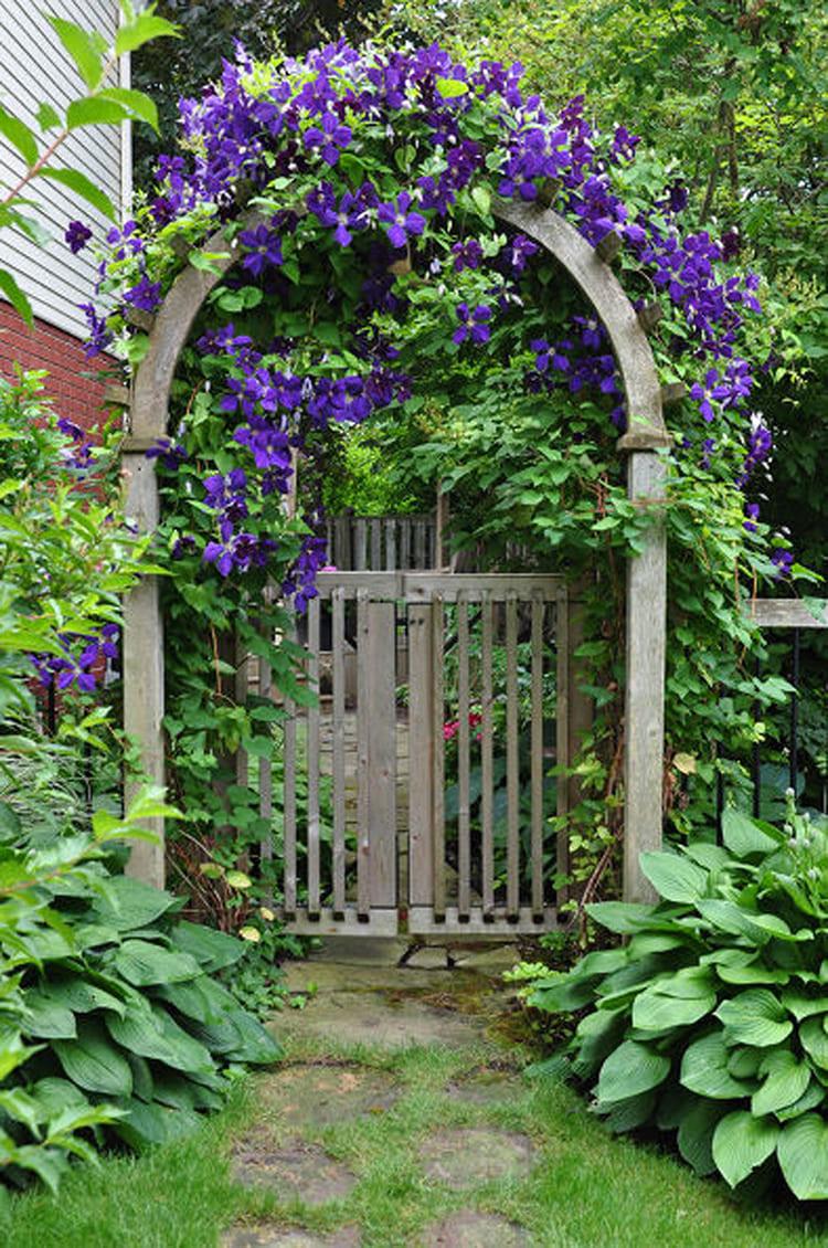 Фото: blog.gardenloversclub.com