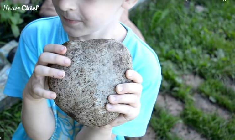 Идею подсказали дети. Они первыми притащили камни