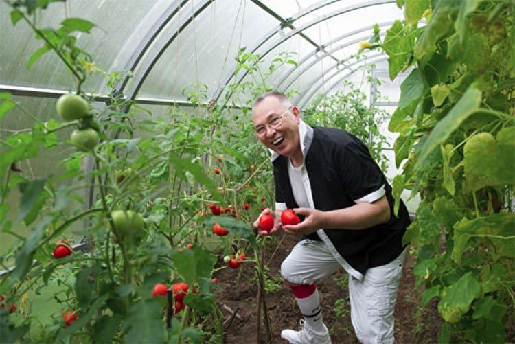 Знаменитый урожай помидор
