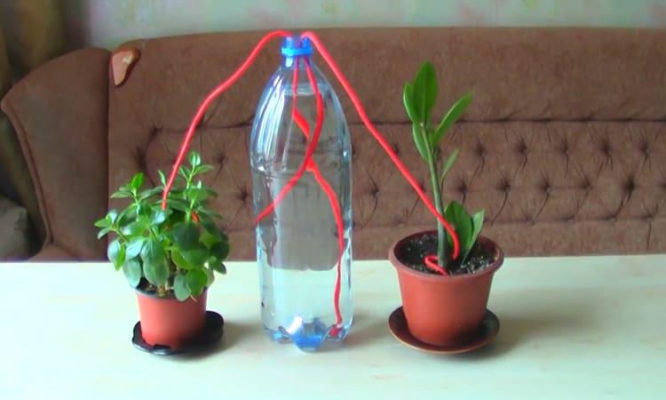 Такая принудительная система пассивного орошения поможет сохранить растения пока вы в отъездеФОТО: youtube.com