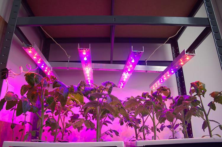 Своевременная подсветка – гарантия качественной рассады ФОТО: i.simpalsmedia.com