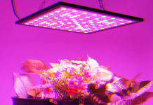 Лампы для растений помогут вырастить хорошую рассаду: как выбрать подходящий вариант и не ошибиться