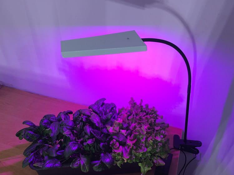 Световой поток разного цвета оказывает различное воздействие ФОТО: фитосвет-врн.рф