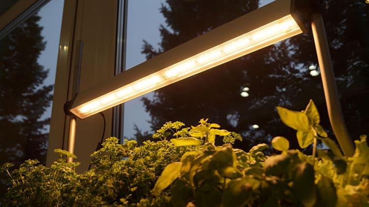 Источник света должен находиться над растениями ФОТО: biosvet.by