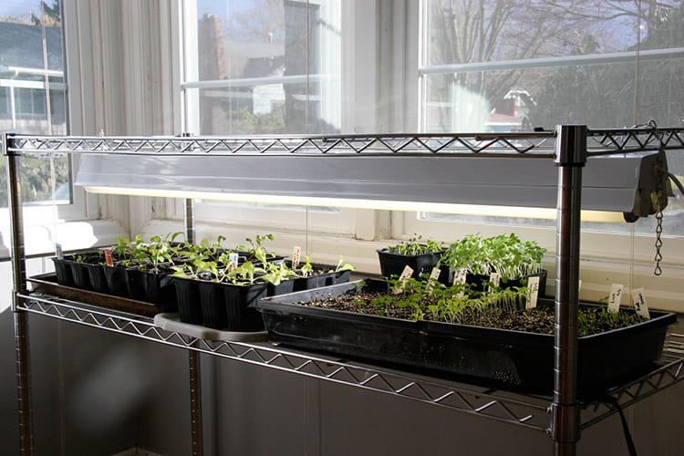 Лампы для растений: как выбрать подходящий вариант для шикарной рассады