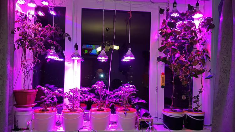 Конструкция лампы может отличаться ФОТО: dacha.help
