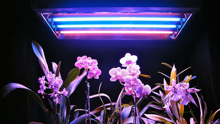 Люминесцентные используются только дома ФОТО: dekormyhome.ru
