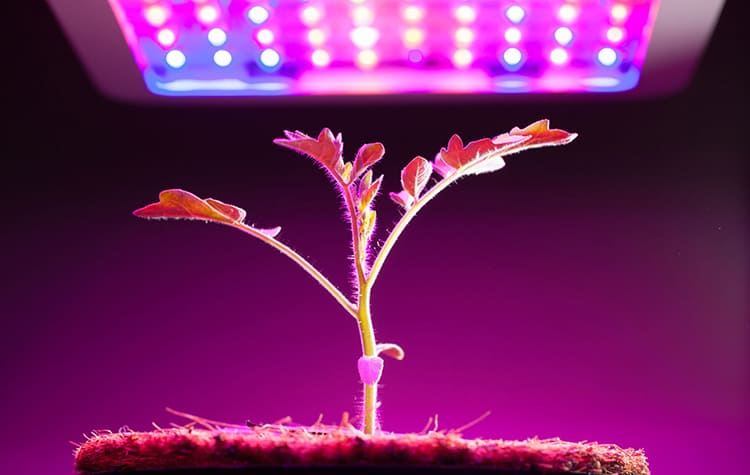 Светодиодные лампы достаточно эффективны ФОТО: stroy-podskazka.ru