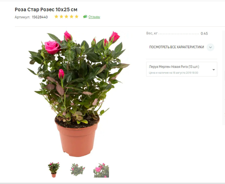 Кроме эстетического удовольствия, вы получите постоянный цветочный аромат ФОТО: leroymerlin.ru