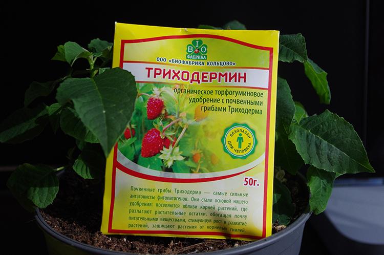 Рекомендации по применению триходермина указаны на упаковкеФОТО: pochtamagazin.ru