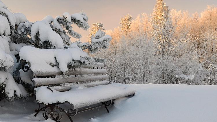 Пропитка защитит дерево от морозаФОТО: widewp.ru