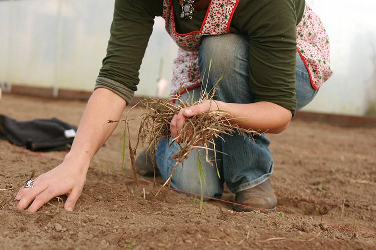 Обработка осенью производится после полной очистки теплицыФОТО: parnik-teplitsa.ru