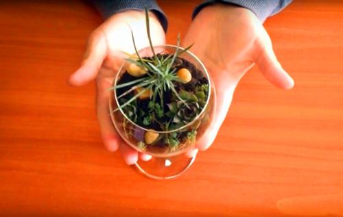 Удивительный мир в бутылке: как сделать флорариум своими руками