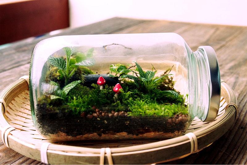 Самый простой флорариум можно обустроить даже в обычной стеклянной банке